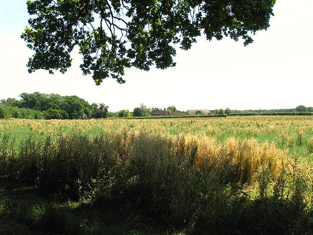 Farmland at Goring Heath near Whitchurch Hill