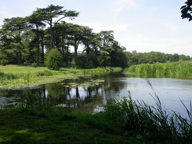 Tern seen from the Weir