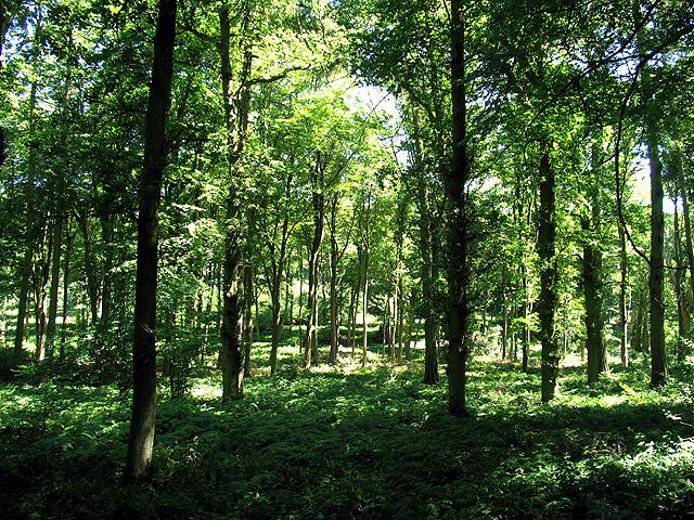 Hawhill Wood