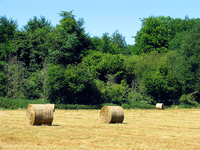 Bales near Collins End Common