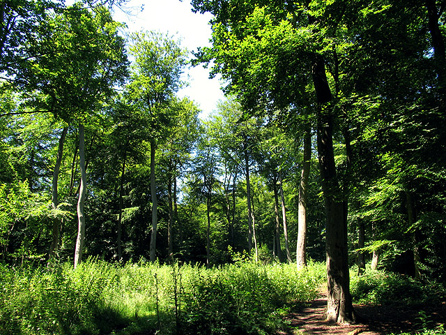Woodland at Nunney Green: Oxfordshire
