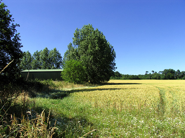 Wheatfield and Barn near Hill Bottom