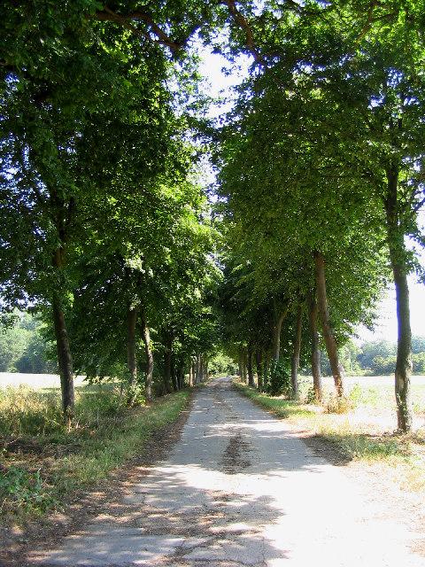 Private road to Cherry Orchard Farm, Orsett, Essex