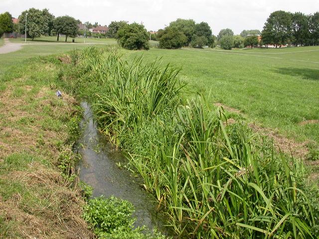 Swanspool Brook, Croyland Park