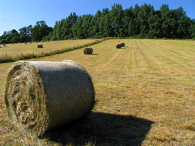 Bales of Hay on Farmland in Woolhampton