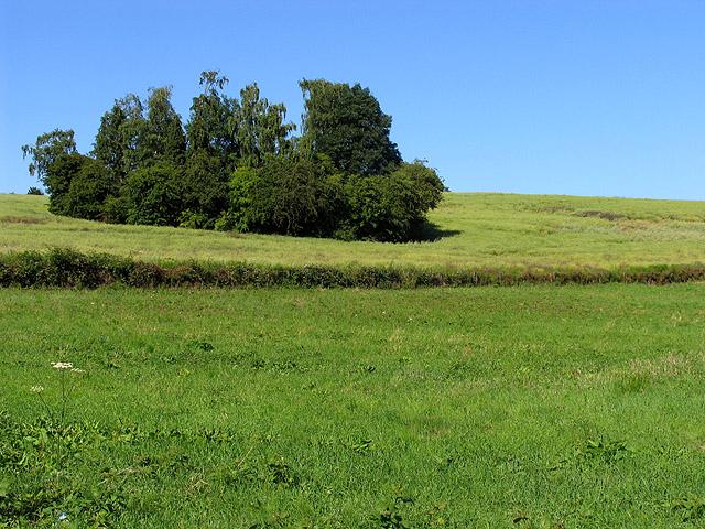 Fallow farmland in Woolhampton