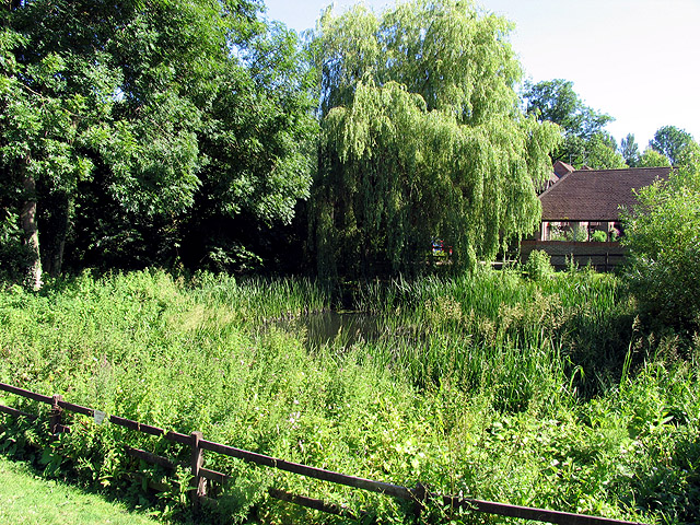 Pond in Woolhampton