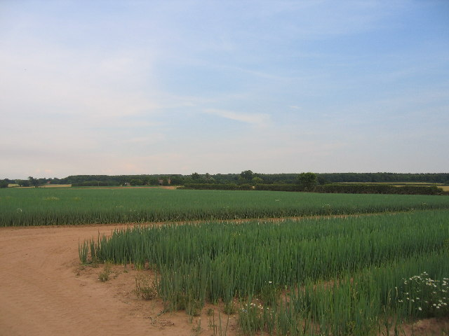 Waverley Farm - Onion Fields