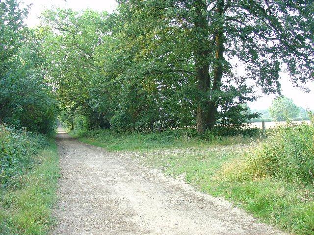 Rural Bridleway near Horsham, West Sussex