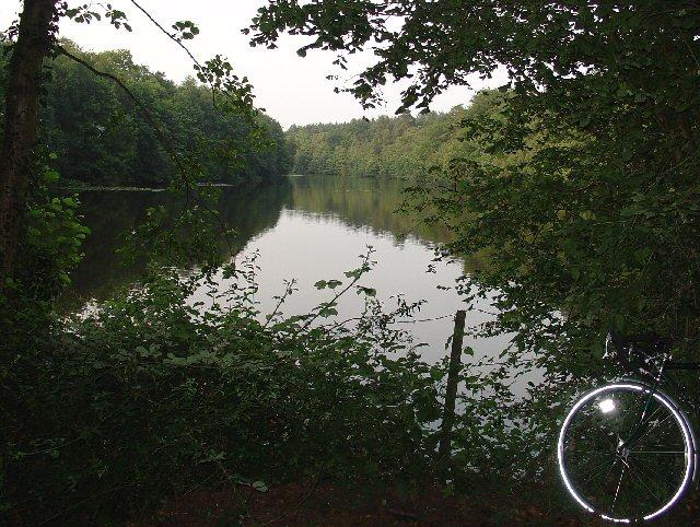 Hawkins Pond, Bucks Head, near Horsham, West Sussex.