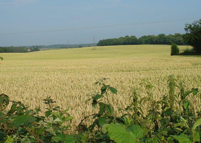 Corn Fields, Pease Pottage
