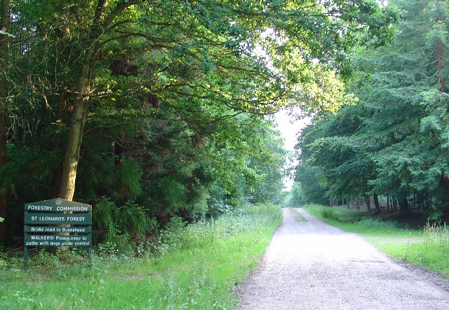Bridle Road To Bucks Head Through St Leonards Forest, West Sussex