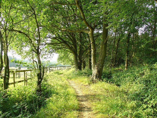 Bridleway through Holmbush Forest, near Colgate, West Sussex