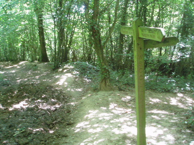 Sussex Border Path in Sandpits Wood