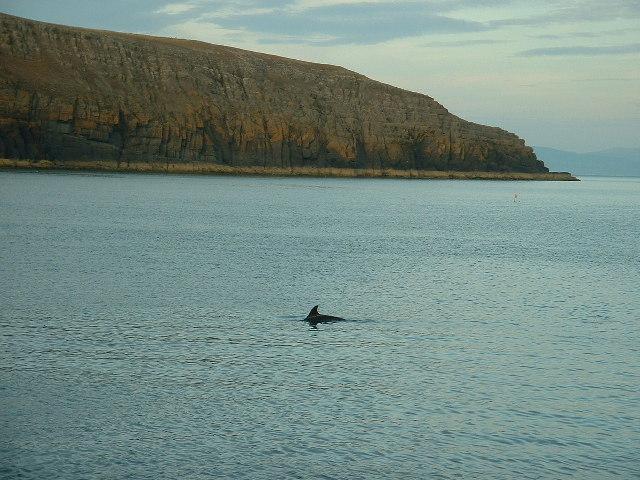 Porth Ceiriad dolphin