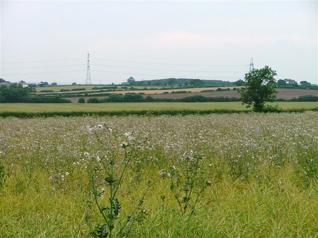 Farmland, Newby