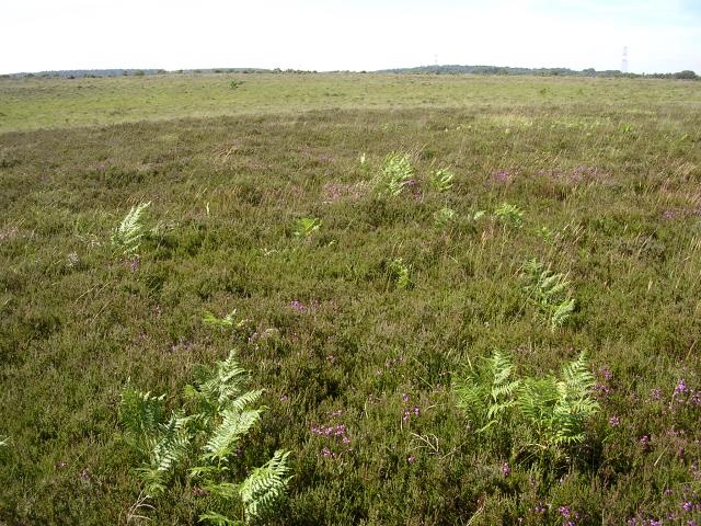 Heathland between Black Gutter Bottom and Deadman Hill, New Forest