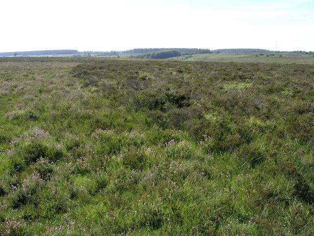 Heathland south of Rushy Flat, New Forest