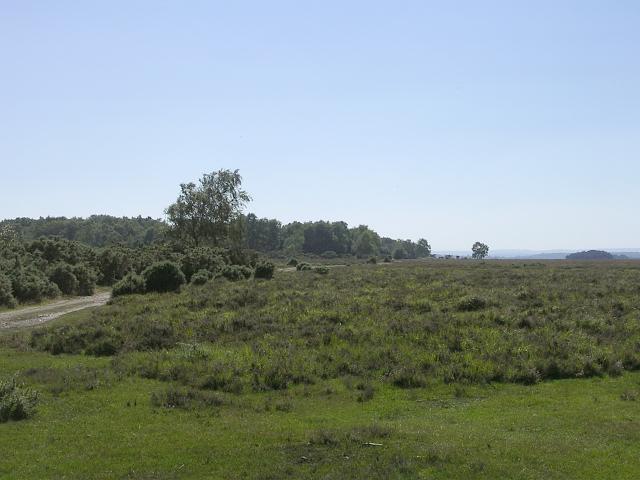 New Forest heathland near the Bramshaw Telegraph