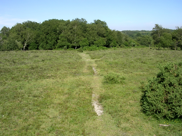 Path through heathland towards Ashens Hat, New Forest