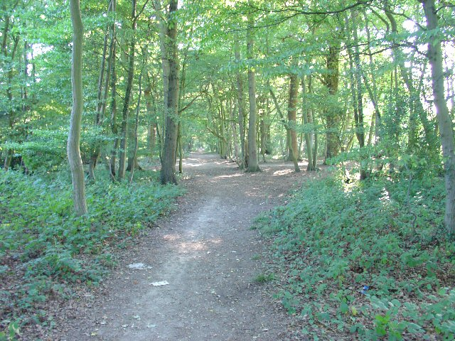 Bridleway through trees from Ifield West (Crawley) to Carylls Lea Junction (Faygate).