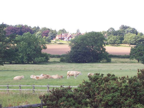Greenbelt land at Widney Manor