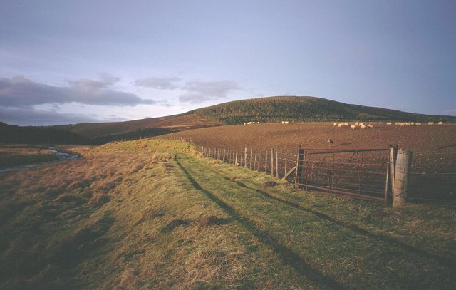 Sheep, Glen Livet