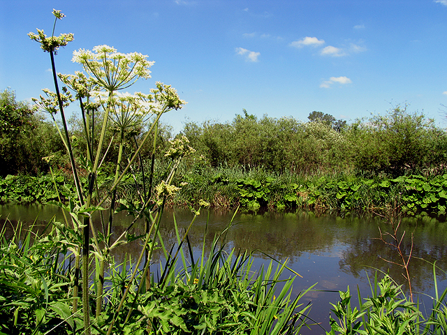 Vegetation along the Kennet and Avon Canal
