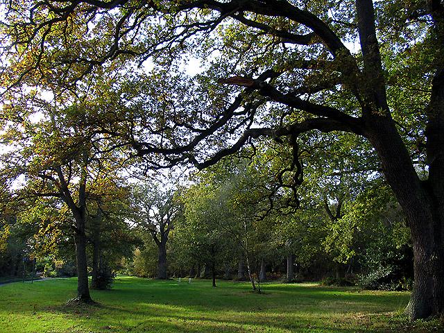 Bradfield Common