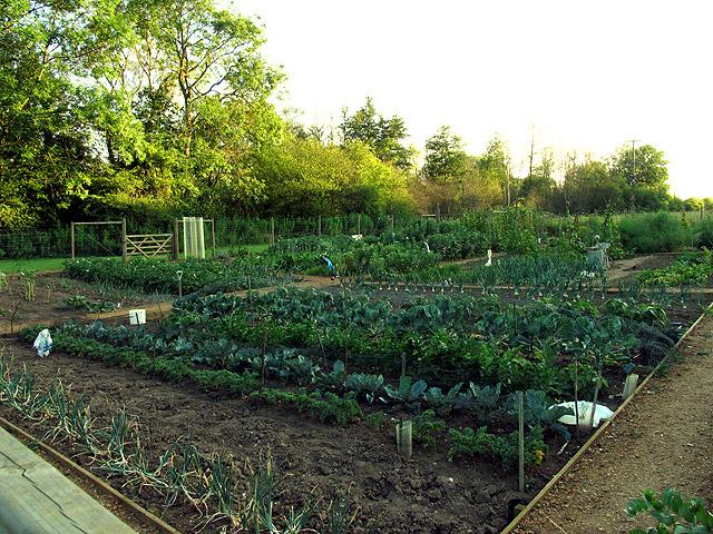 Allotment Gardens: Woolhampton