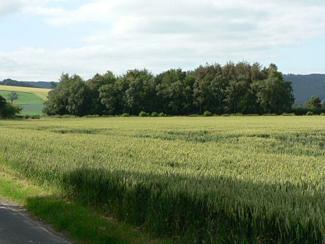 Crops and woodland