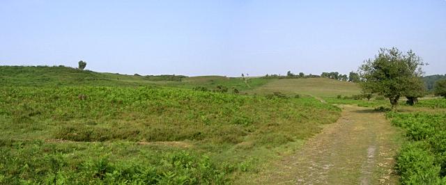 Deadman Hill from Cunninger Bottom, New Forest
