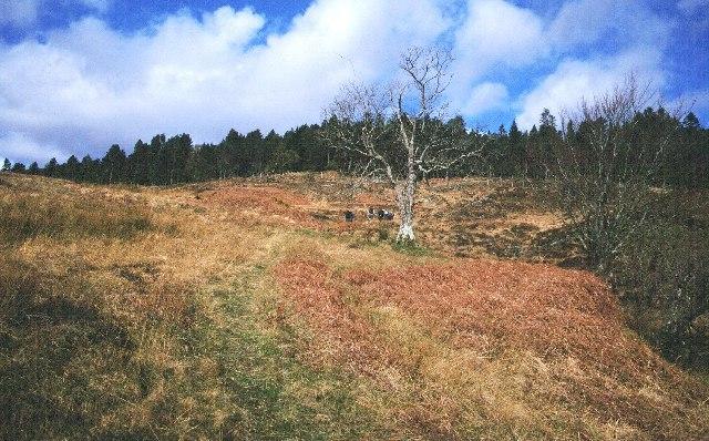Pony track to Loch a' Mhuilinn.