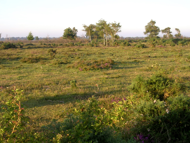Heathland on Hatchet Moor, Beaulieu Heath, New Forest