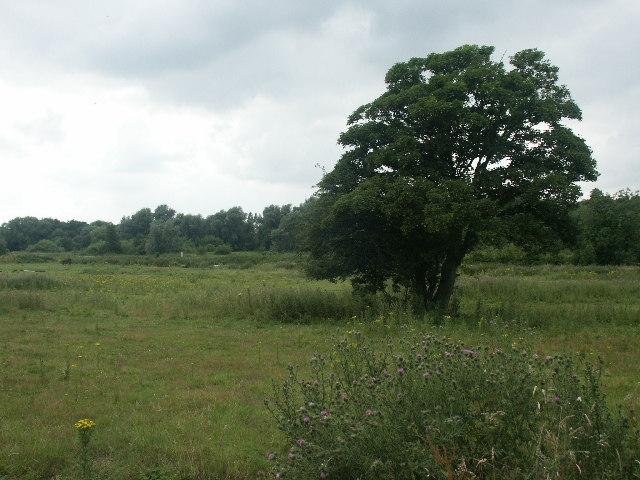Marshes near Lakenham