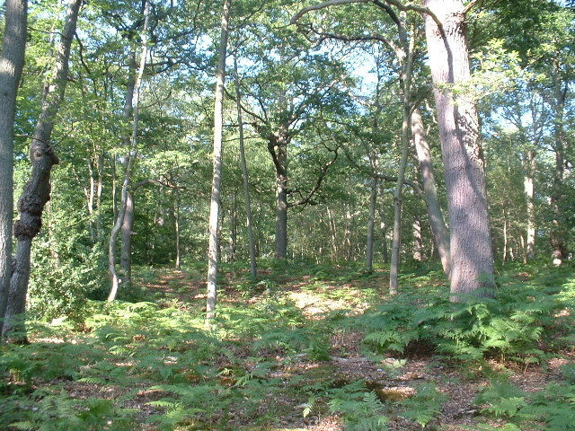 Hoddesdon Wood Nature reserve