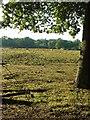 TQ1937 : Grazing Horses New Barn Farm, Near Rusper, West Sussex by Pete Chapman