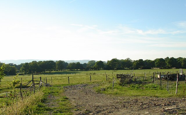 Grazing Fields next to Cowix Farm. Near Rusper, West Sussex