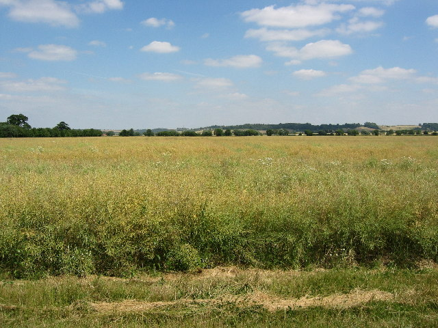 Arable farmland adjacent to the Grantham Canal