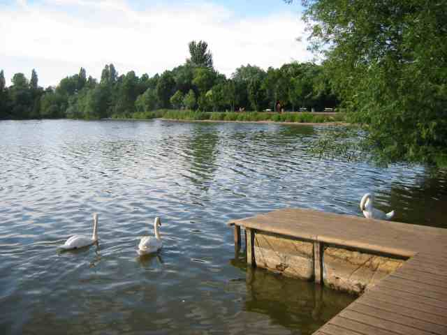 Batchwood  Lake at the Aquadrome  Rickmansworth