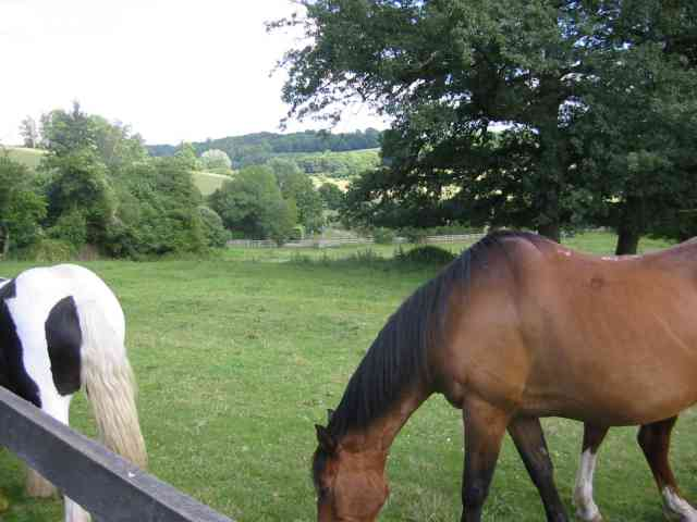 Horses in the countryside, Latimer