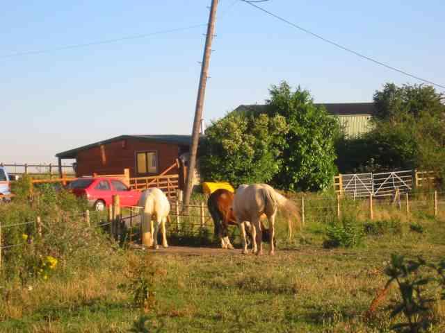 Horses at Colney Farm Harefield