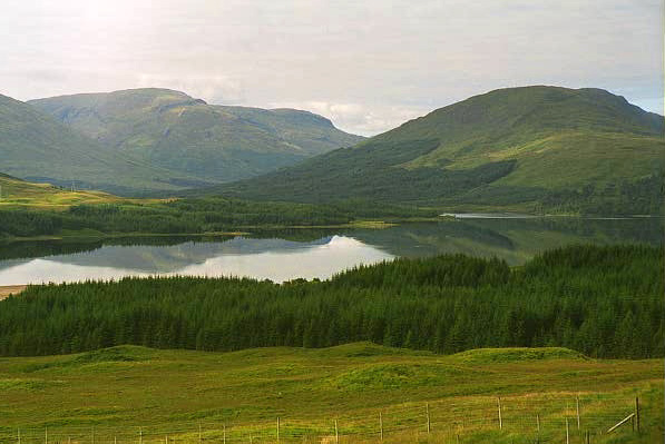 Coniferous Plantation along Loch Tulla
