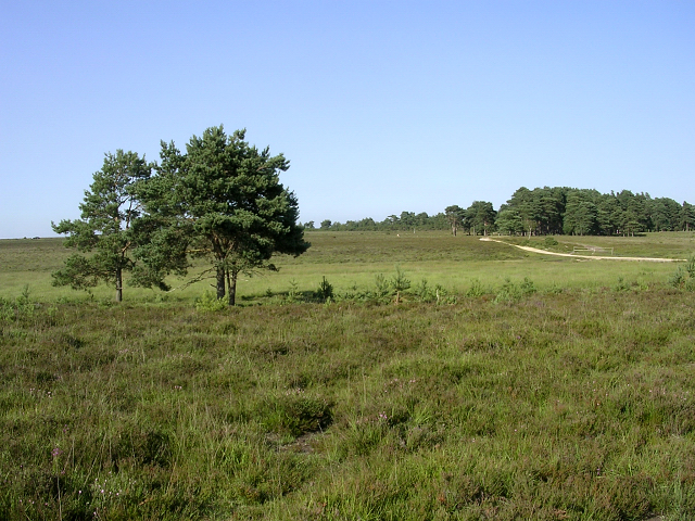 Shatterford Bottom, New Forest