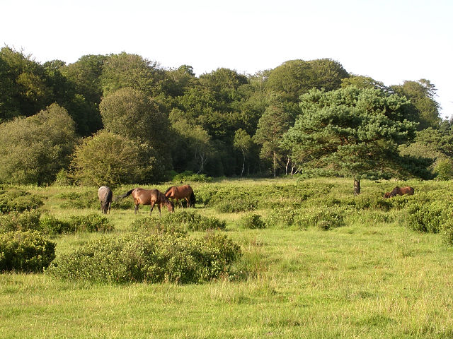 Ponies grazing south of Denny Wood, New Forest