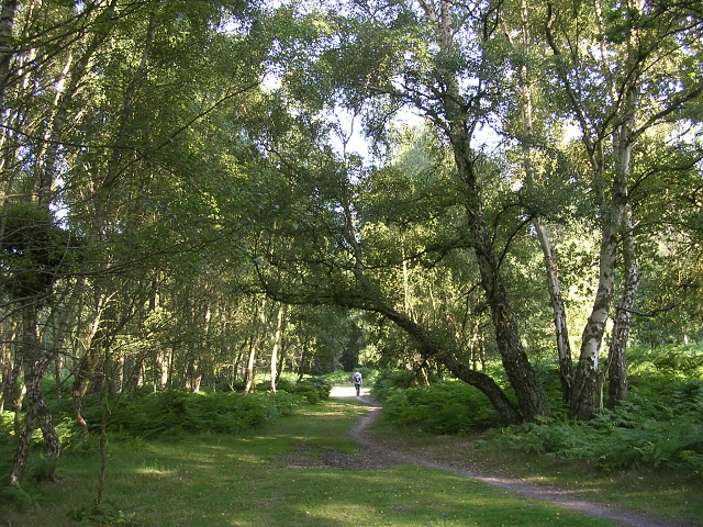 Path through birch woodland on the fringe of Denny Lodge Inclosure, New Forest