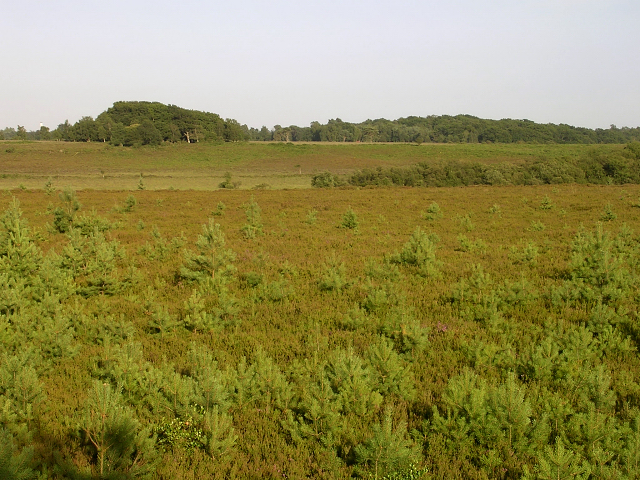 Heathland around Stephill Bottom, New Forest