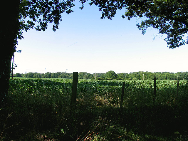 Cornfield at Baughurst
