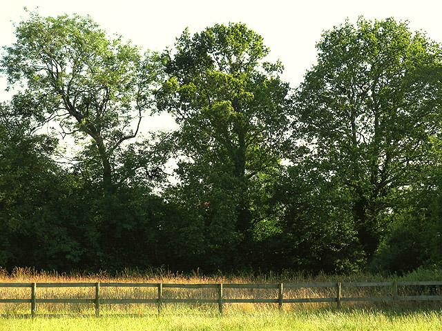 Paddock near Browning Hill Green