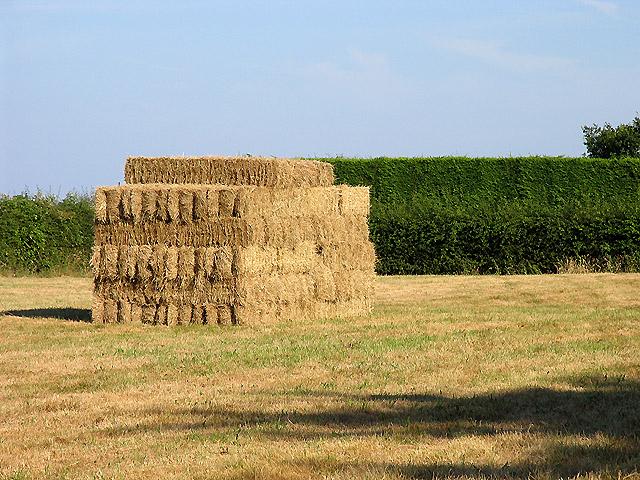 A Neat Haystack near Coombe House Farm